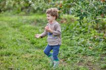 orchard trip 17 Roan running with apple