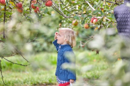 orchard trip 17 Theo reaching for an apple